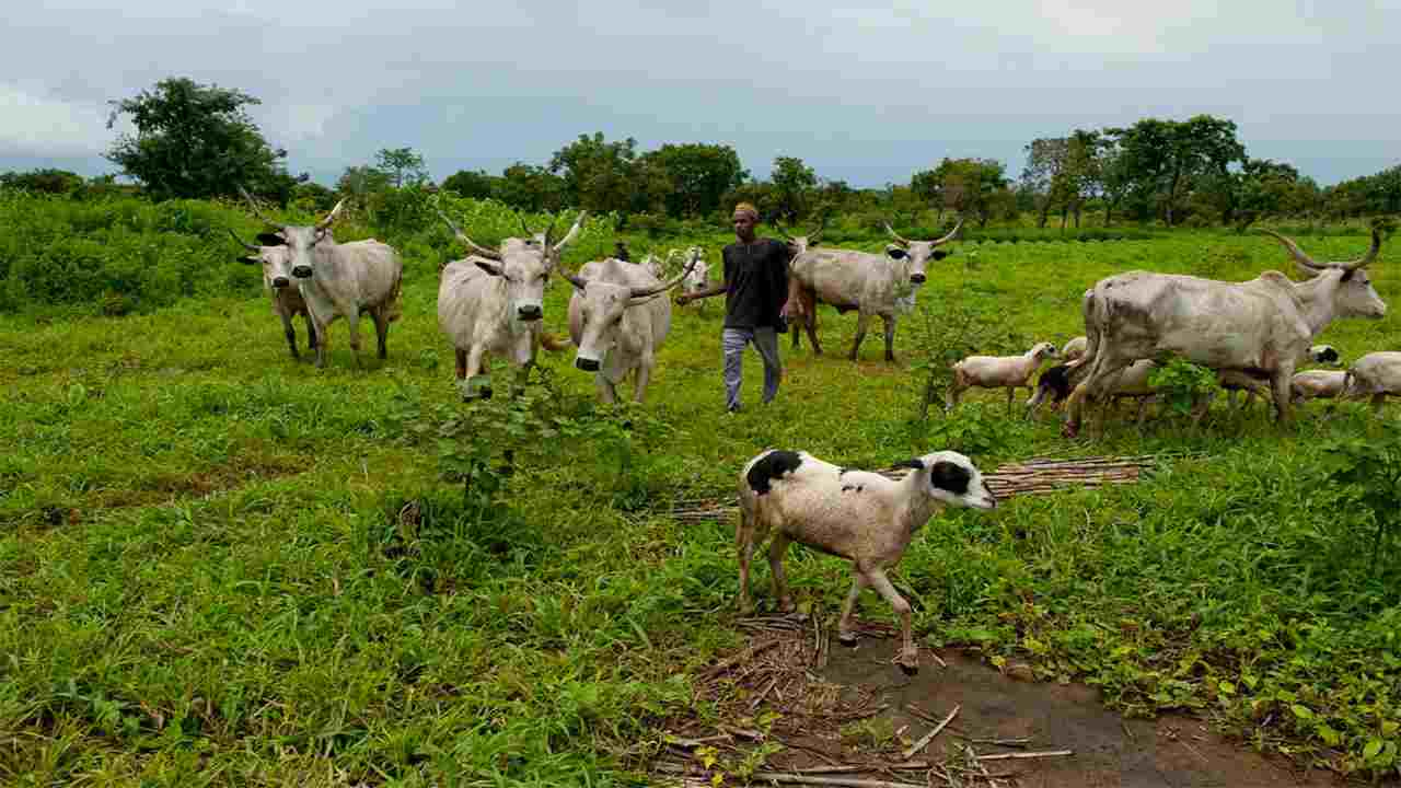 Not all Myetti Allah members are Fulani - Cattle owner, Iorfa explains
