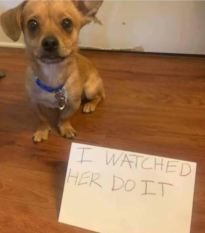 Parents come up with hilarious punishment for their daughter who broke eggs then accused the dog
