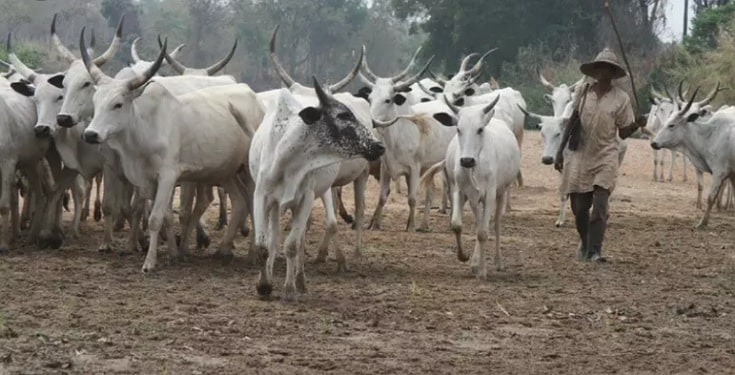 Herdsmen Ordered to Vacate Edo Community within 14Days