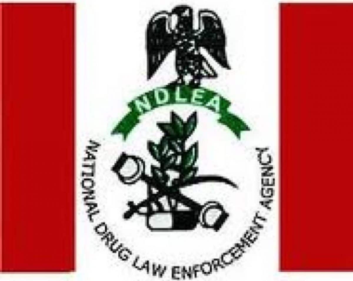 NDLEA arrests 70, seizes 1,537KG of Illicit Drugs in Kano State