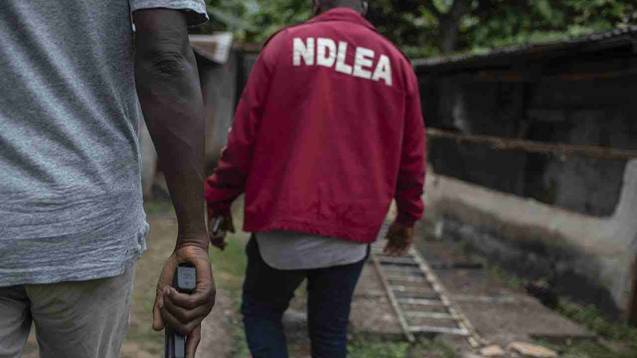 NDLEA Nabs man with Two Human heads in Ondo State